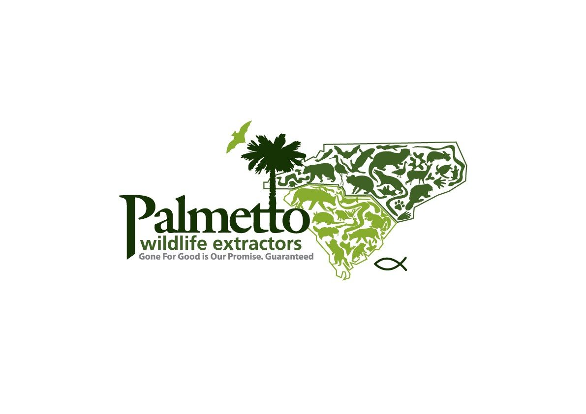 palmetto-wildlife
